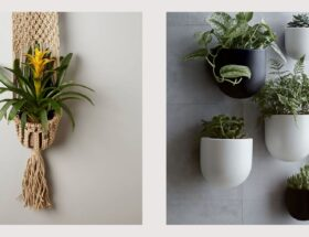 hanging pot plants online