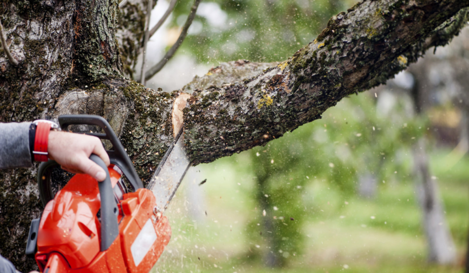 tree cutting services in Sacramento